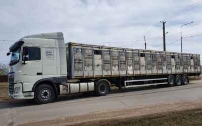 Перевозка животных и скота 8-965-920-08-80 - Смоленск, цены, предложения специалистов